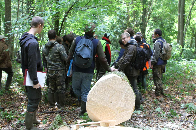 USAB-Connaissances de la forêts et des produits - classement, estimation bois sur pied/ronds, débouches