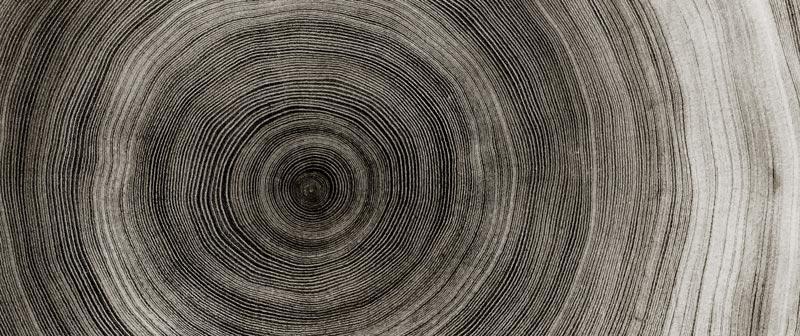 USAB-Connaissances de la forêts et des produits - connaissance du bois