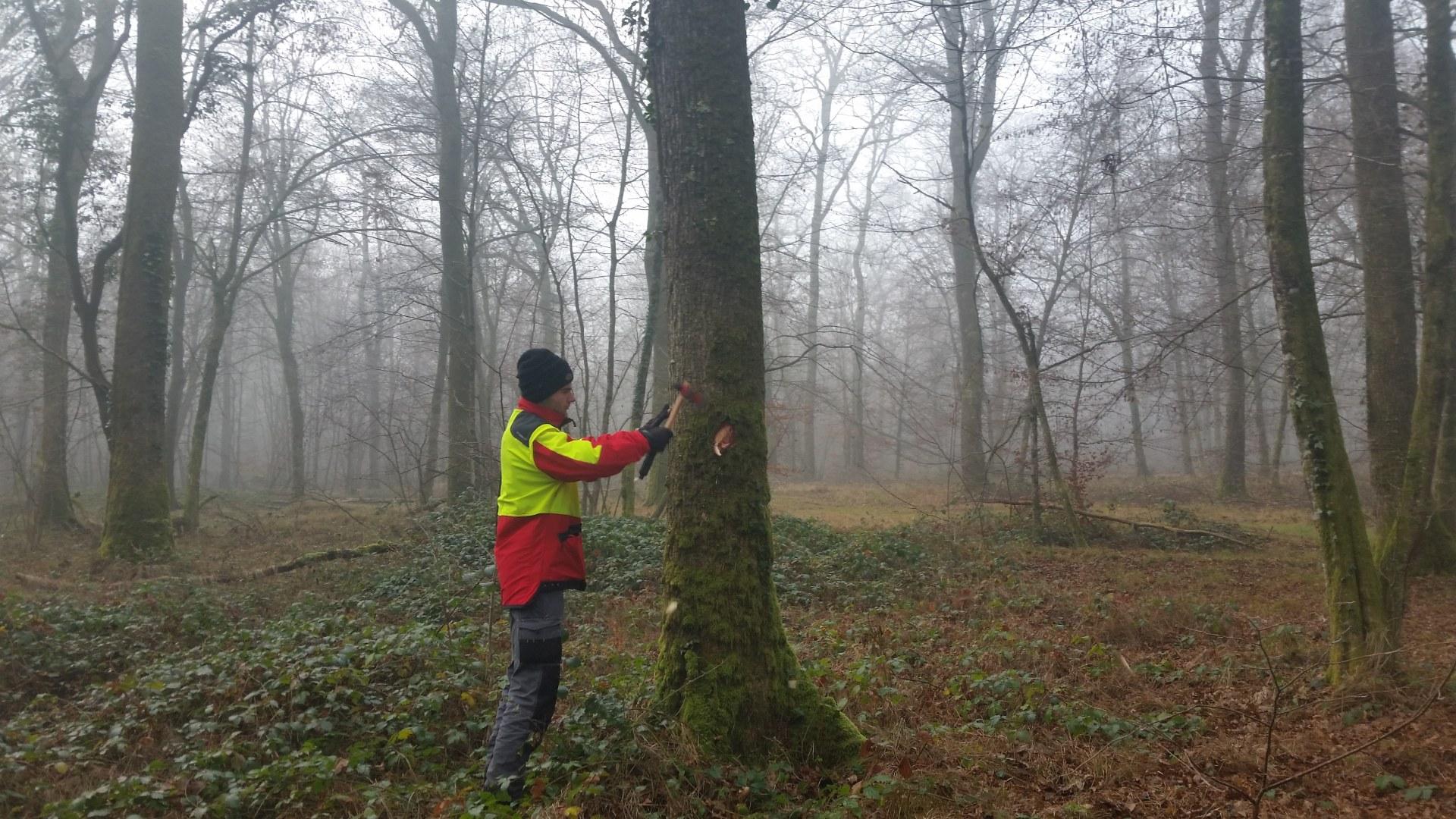 Sylviculture-Technique forestière  (M53)