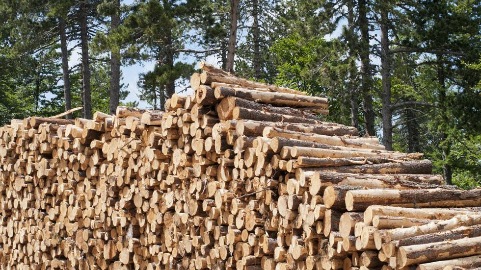 Mobilisation des bois