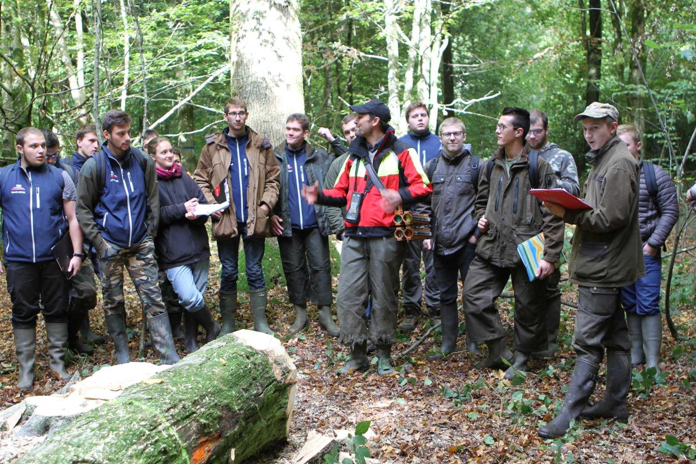 Mobilisation des bois  2ème partie BTS GF initial