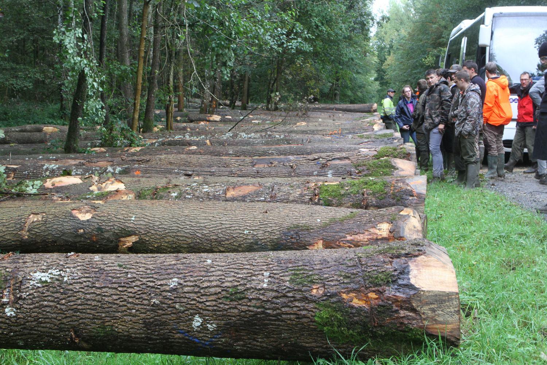 Mobilisation des bois 1ère partie BTS GF initial